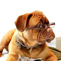 Asking A Girl To Be Logical Is Like Expecting A Dog To Read